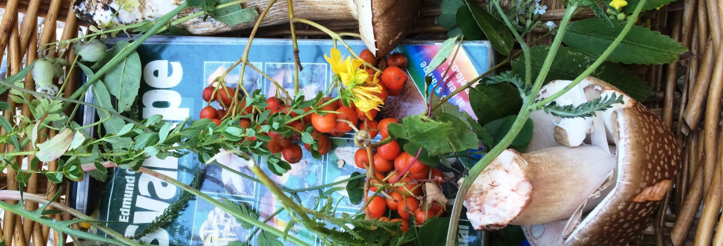 svamopekurv med bog, svampe og urter