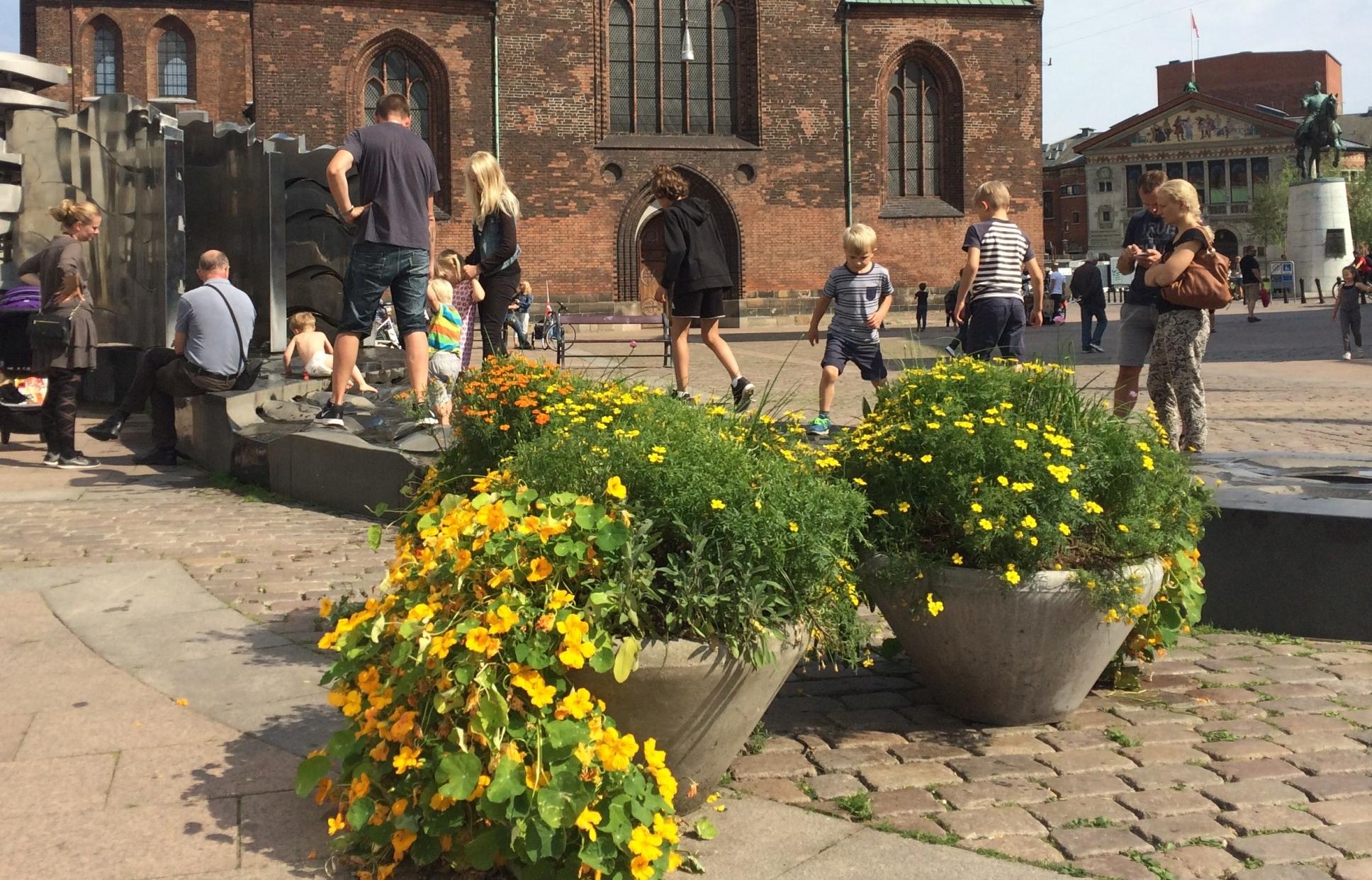 Spiselige blomster foran Domkirken