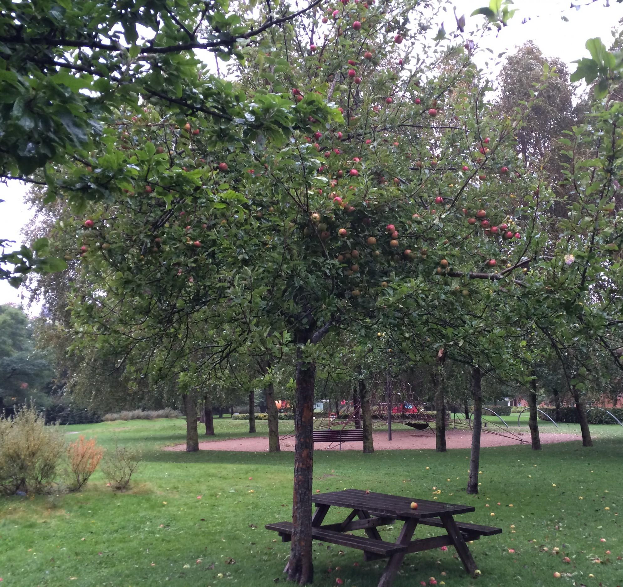 Æbletræer i Frederiksbjerg Bypark