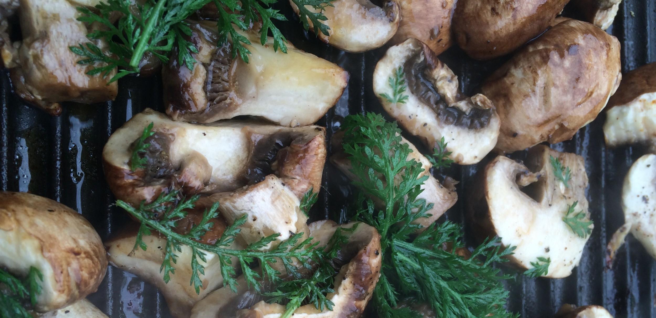 Rølikke og svampe